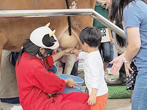 昨年11月2日に横浜の雪印こどもの国牧場まつりで、乳搾り体験などが行われた