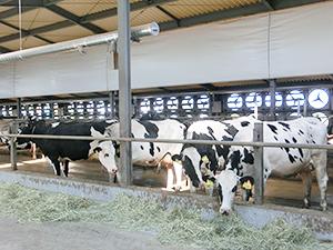 センサーで換気扇を自動制御することで、牛舎内の温度、湿度、風速を均一に保つ