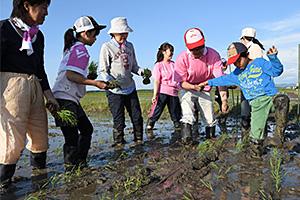 組合員が秋田県で実際に田植えをし、産地と交流する(写真提供=ユーコープ)