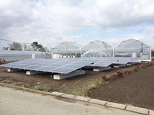 太陽光利用の農業施設「善導寺ファーム」