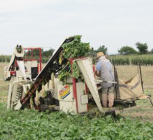 収穫機導入で負担は減るが人手は必要