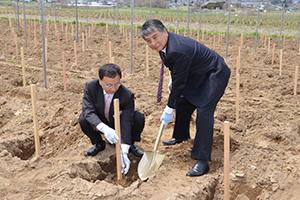 ブドウの苗木を植樹する代野照幸社長(右)