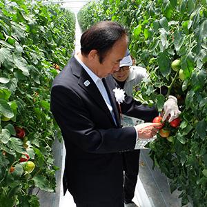 収穫体験する上田清司埼玉県知事
