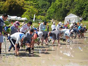 食品産業と農畜水産業のさらなる連携が日本の食糧需給を支える(写真=宝酒造「田んぼの学校2017」)