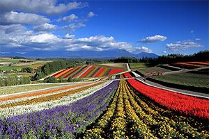 元気に咲き誇る花々や丘陵美が自慢の道北の観光地・美瑛。遠方には十勝岳連峰がそびえる
