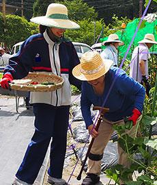 農作業をする患者たち。身体状況に応じて参加できるのが強み