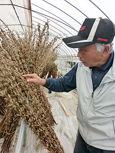 「今年は色味も良く、品質の高いごまができた」と高根沢胡麻生産組合の斎藤勇次組合長