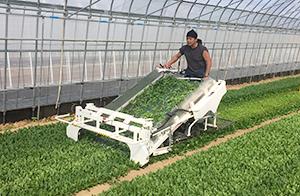 北杜市の高根菜園。種まき後1ヵ月で収穫できる管理のしやすさも強み