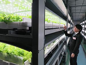 vechicaに設置されているセル式栽培棚