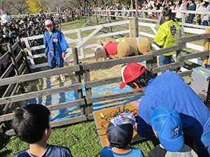 牧場などで直接動物とふれあう体験も、乳製品への正しい理解と購買意欲につながる