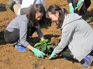 生産現場に触れ、苗を植えるAGF社員にも笑みがこぼれる