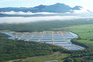 豪州クイーンズランド州既存のエビ養殖場