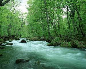 悠久の大自然が育む「天然水」は貴重な資源となる。大自然が育む息吹を「天然水」を通じて、人間は恩恵を得ている