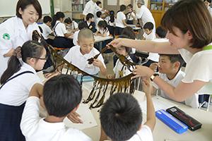 実際のワカメに触れ、興味を示す子どもたち