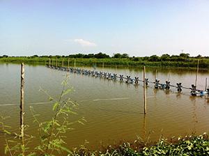 タイは日本向けエビの一大生産地。このような養殖池が全国各地の沿岸部に広がる