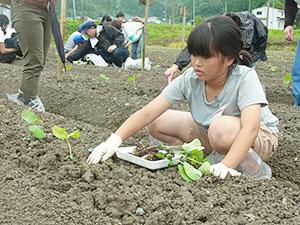 作付けした黒豆は、秋に自ら収穫する
