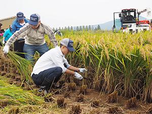 香港から来日した百農社の社員がコメの収穫を体験