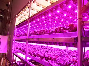 独自の光制御技術で付加価値の高い野菜を生産できる