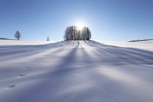 丘の町で知られる美瑛町は、シーズンを通して観光客に人気。雪の大地を冬陽が照らす美瑛・マイルドセブンの丘